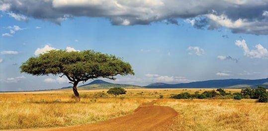 cursus persoonlijke ontwikkeling live safari